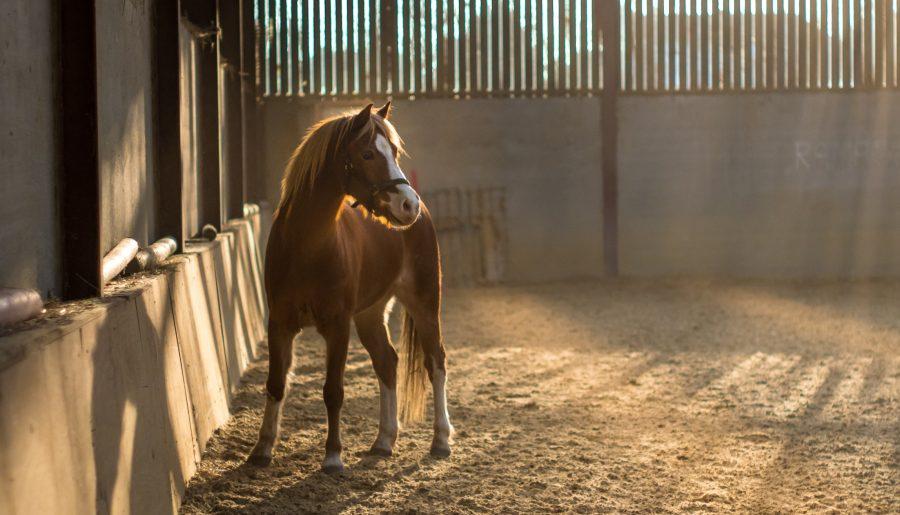 Un poney pourrait avoir été tué par balle dans le Tarn