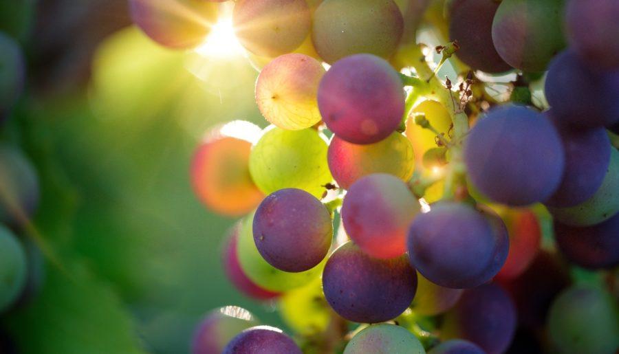 La cure de raisin : ça vous dit quelque chose ?